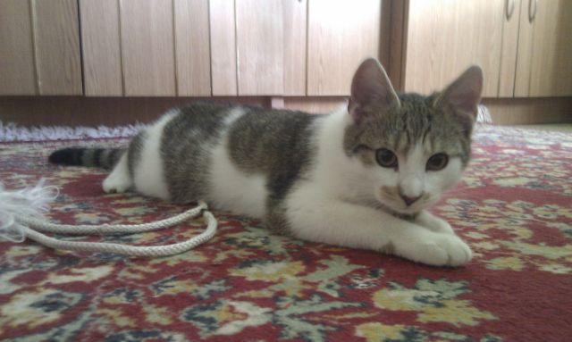 macska bajuszka