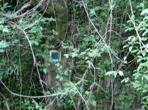 A természetvédelmi terület határát jelző kék négyszög