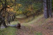 Novemberben avarpléddel erdőt, mezőt úgy takart, hogy a dermedt, fagyos tájon biztonságban tudja majd