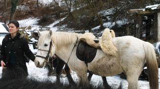 Réka is elővezeti a lovát