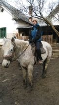 Dalma lova a legnagyobb
