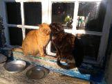 """Testvérek? Vagy """"csak"""" meleg(edő) cicák?"""