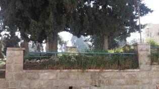 Arab temető szögesdrót mögött Hebronban
