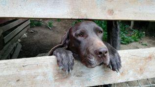 Rex, Florea úr kutyája