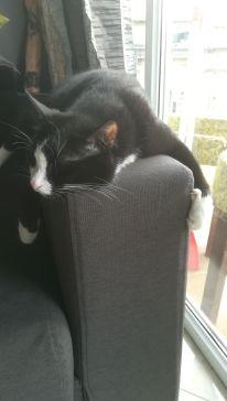Házigazdánink macskája