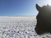 A Terramont és a Kalotaszegi Turul Nomád Hagyományőrző Egyesület által szervezett téli lovaglás résztvevői 2020. február 9-én