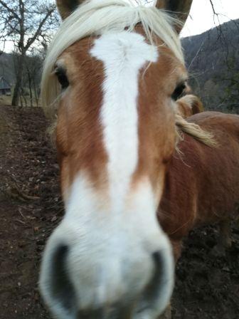 Kiki egyik lova