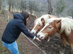 Kiki mindkét lova